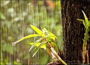 soft-rains